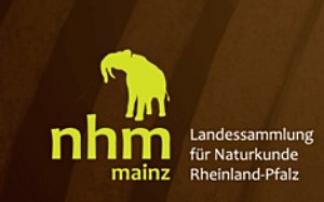 Fossilien entdecken (c) Naturhistorisches Museum Mainz