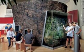 Maarmuseum Manderscheid