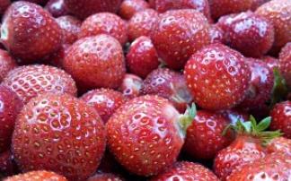 Marmeladenmarkt am Haus der Nachhaltigkeit in Trippstadt