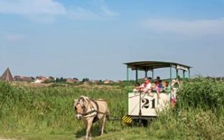 Museumspferdebahn auf der Insel Spiekeroog