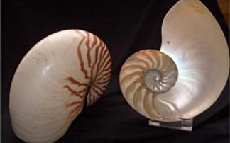 Meeresmuseum Ozeania