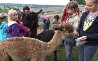 Kindergeburtstag mit Sajama-Lama