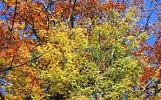 Herbstmesse in Speyer