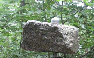 Stein im Wald