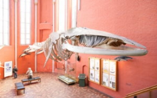 Deutsches Meeresmuseum in Stralsund