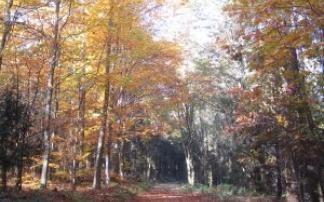 Walderlebnispfad Dornstadt (c) alex grom