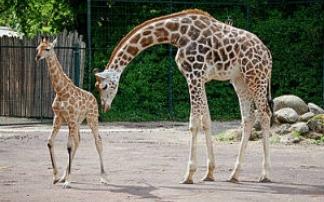 Zoo Magdeburg Kindergeburtstag