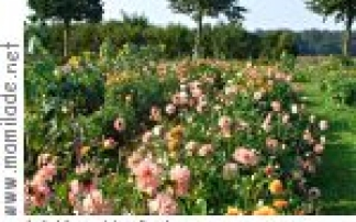 Sieversdorf Maislabyrinth