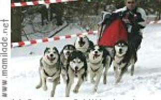 Internationales Schlittenhunderennen in Benneckenstein