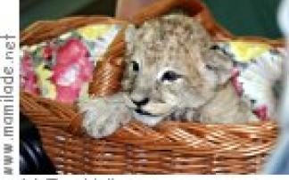 """Fotoausstellung """"Tierkinder"""" im Zoo Halle"""