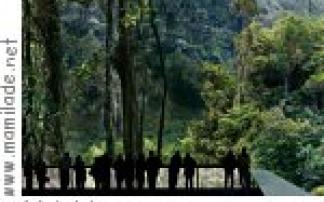 Amazonien - eine Ausstellung im Asisi panometer