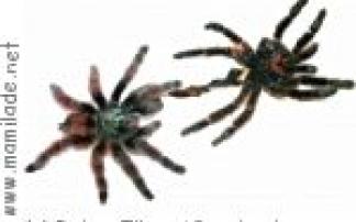 Naturmuseum Senckenberg Frankfurt:  Faszination Spinnen