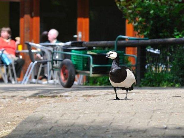 Tierbeobachtungen im Tierpark