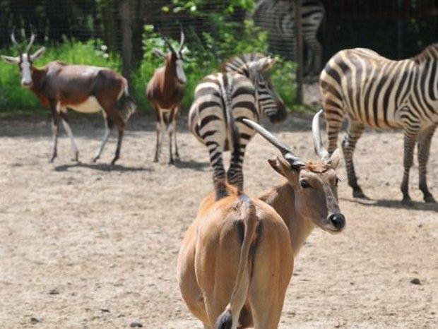 Tiere im Tierpark