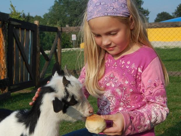 Mädchen füttert eine Ziege
