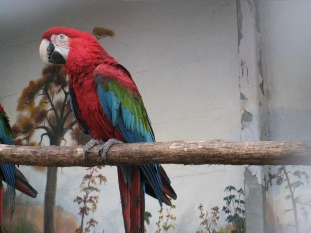 Ara im Tierpark Walldorf