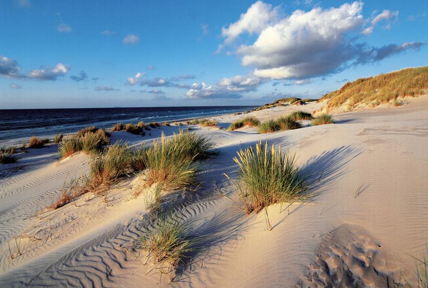 Dünen auf der Halbinsel Fischland-Darß-Zingst Copyright: TMV/Grundner
