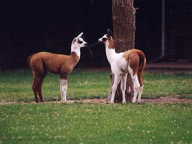 Tierbeobachtungen im Tierpark (c) Tierpark Dessau
