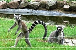 Tierpark Angermünde, © Stadt Angermünde