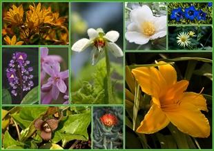 Artenvielfalt im Botanischen Garten