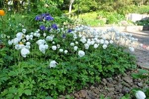 Botanischer Garten Bad Langensalza