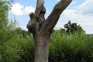 Baumstamm im Grünen