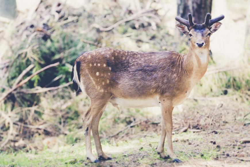 Symbolfoto: Wald- und Naturlehrpfad mit Wildpark Wiehl
