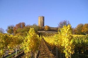 Blick auf die Burg Steinsberg und die Weinberge
