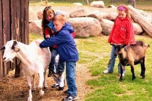 Kindergeburtstag auf dem Spargelhof in Klaistow
