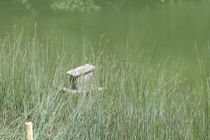 Natürlicher Ufersaum am Fluß