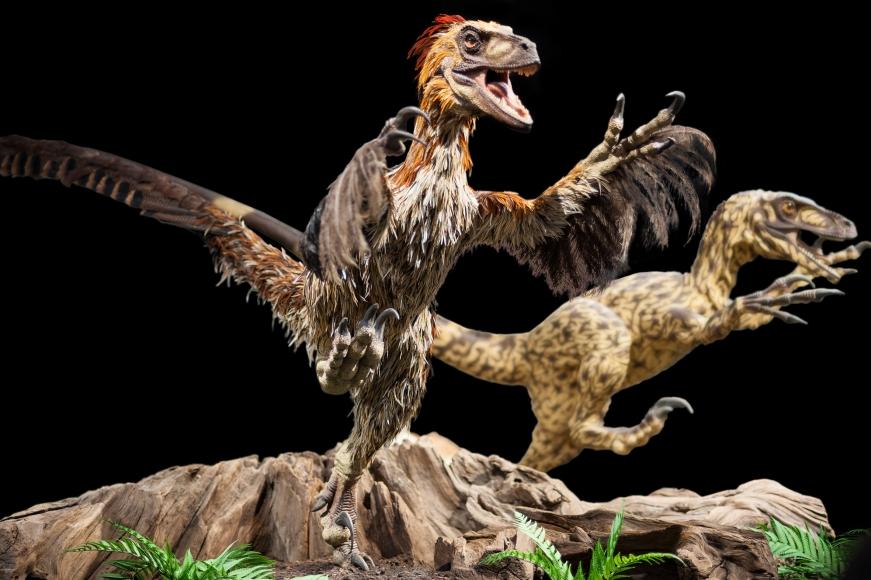 Dinosauriermuseum für Naturkunde