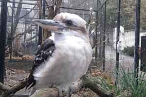 Vogelpark Kunschmann in Deschka
