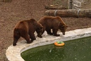 Bärengehege Droyßig
