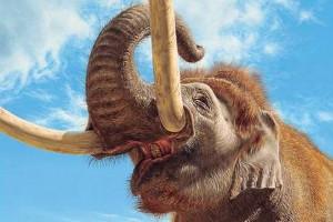"""Mammut """"Elefantenreich"""" Sonderausstellung im Naturhistorischen Museum Braunschweig"""
