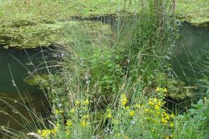 Gewaesser mit gelben Blumen