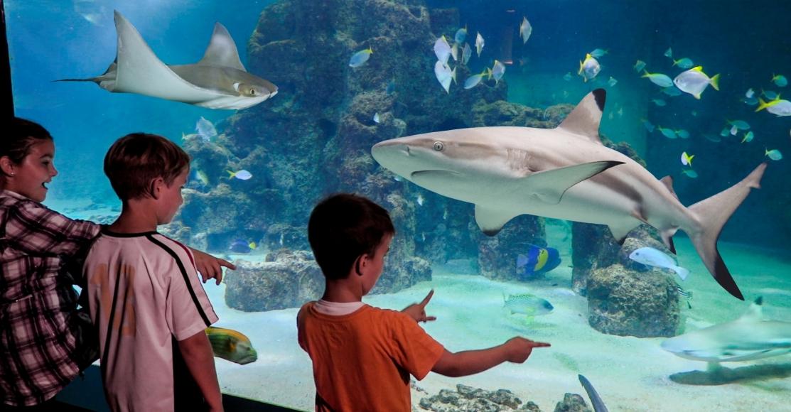 Kindergeburtstag im Spielpalast im Aquarium Wilhelmshaven