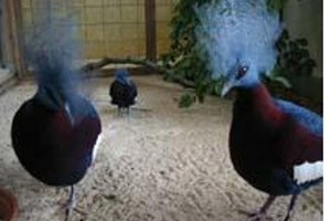 Vogelbeobachtungen im Vogelpark (c) Vogelpark Herborn