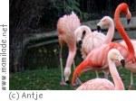 Zootage im Zoo  Frankfurt am Main