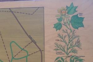 Teil einer Infotafel am Walderlebnispfad