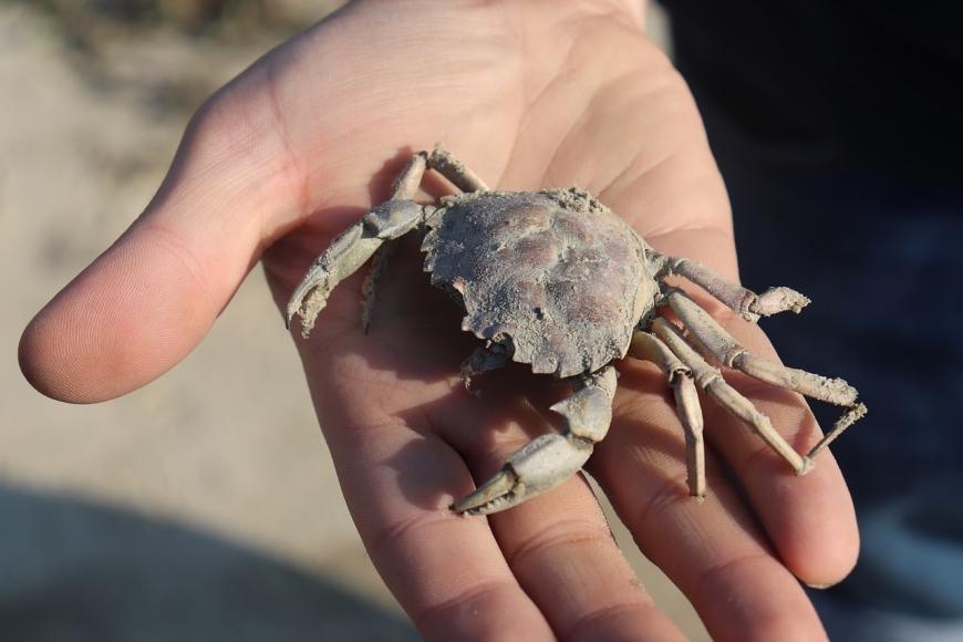 Symbolfoto Krebse streicheln in der meeresbiologischen Station Laboe