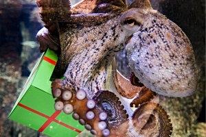 Sea Life München Kindergeburtstag
