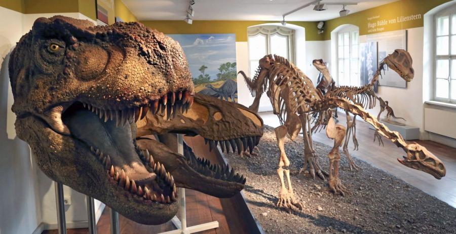 Naturhistorisches Museum in Schleusingen