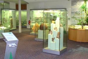 Ein Teil der Ausstellung Erdgeschichte (c) Naturkundemuseum Coburg