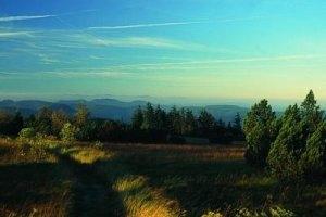 Der Grindenwald (c) Naturschutzzentrum Ruhestein