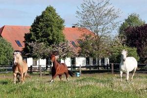 Reiten auf dem Ponyhof Neuholland in Liebenwalde