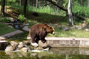© Tierpark Perleberg