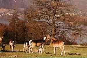 (c) Wildpark Rolandseck in Remagen