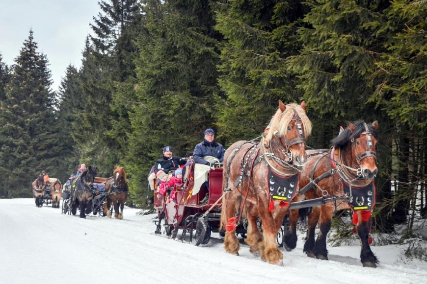Pferdeschlittenfahrt auf den Rennsteig von und nach Oberhof(