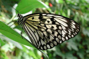 Schmetterlingspark in Buchholz