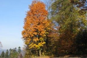 Naturpark Schönbuch (c) alex grom